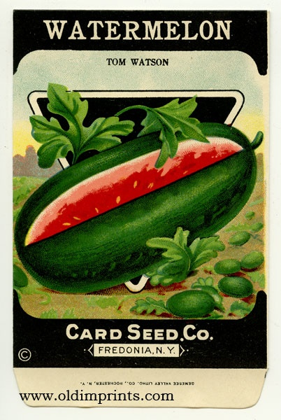 17 Best images about Vintage Seed packets on Pinterest.