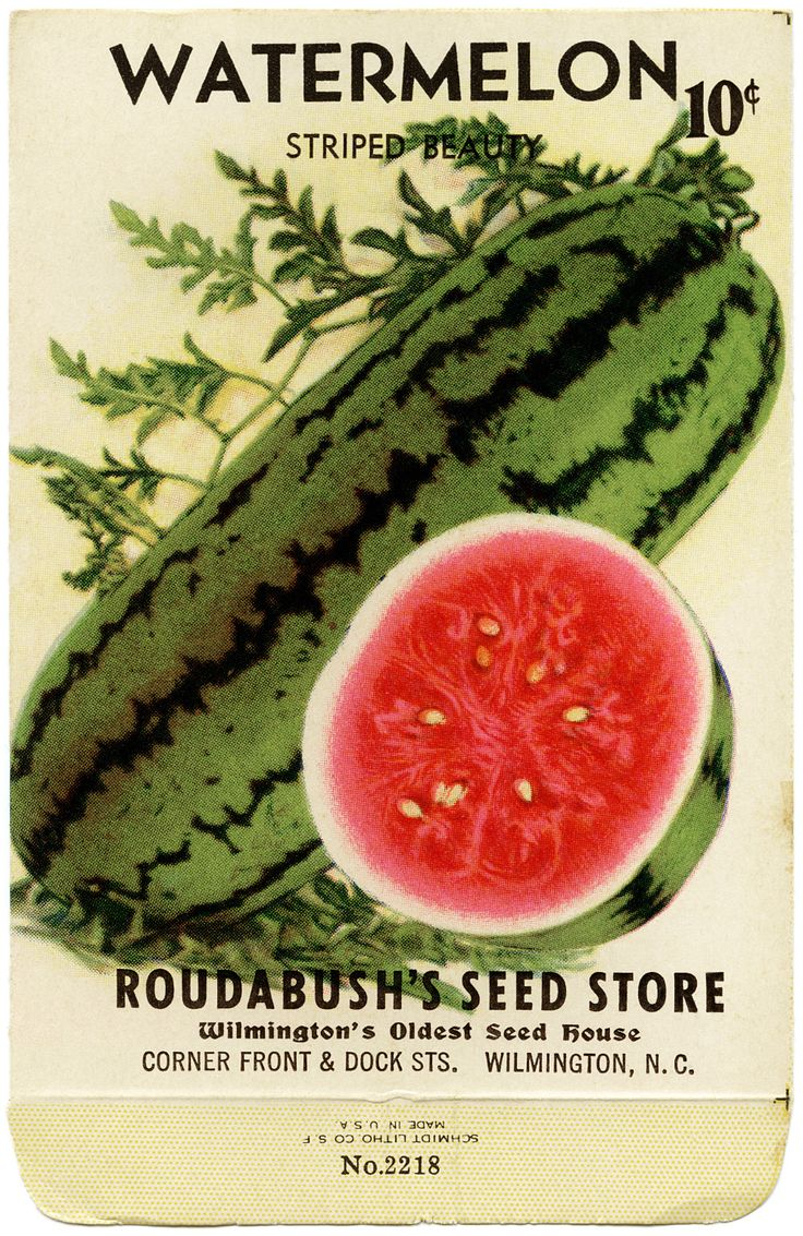 Beautiful Seed Packets on Pinterest.