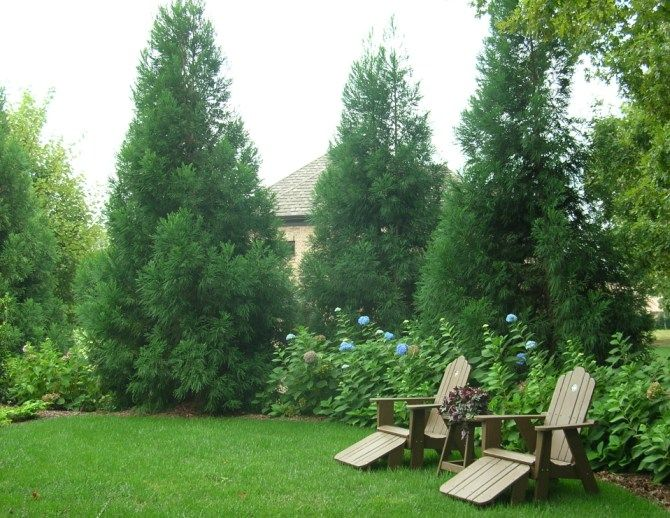 1000+ ideas about Natural Privacy Fences on Pinterest.