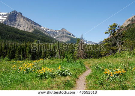 Summer View Of Forests And Mountain In Waterton Lakes National.