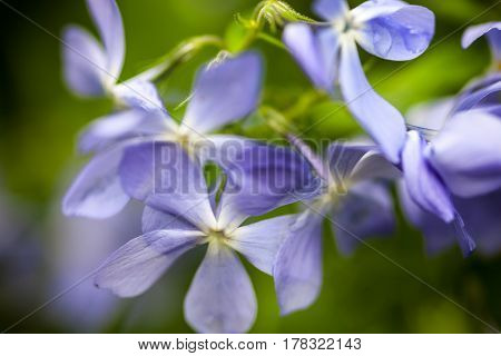 Divaricata Images, Stock Photos & Illustrations.