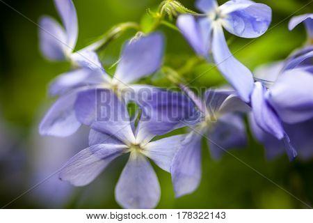 Divaricata Images, Stock Photos & Illustrations.