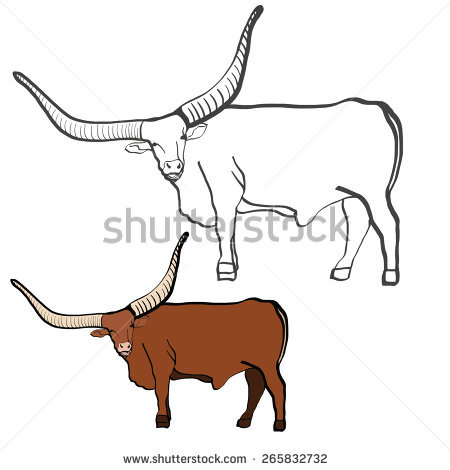 Bull With Large Horns. Tour. Watusi Bull. Graphic Quality And.