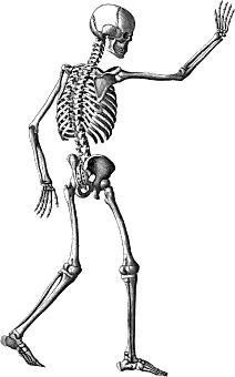 Free Skeleton Clipart.