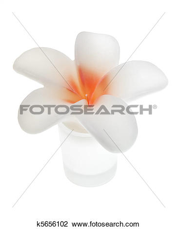 Stock Photo of Wax Flower k5656102.