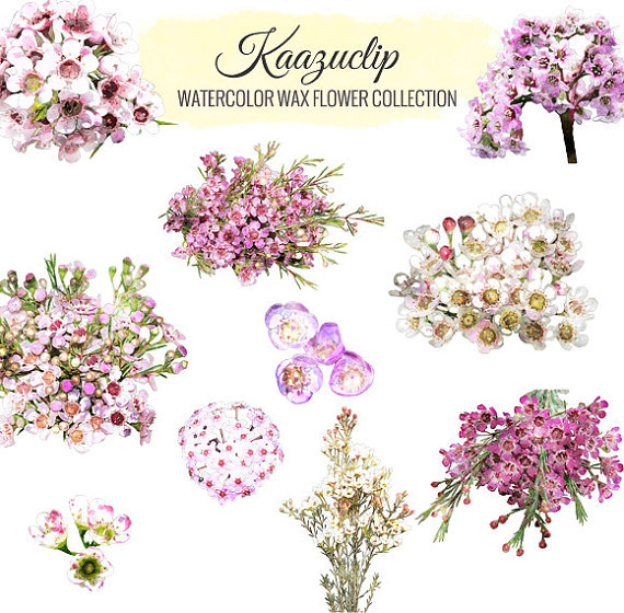 Watercolor Wax Flower Collection by kaazuclip on Etsy.