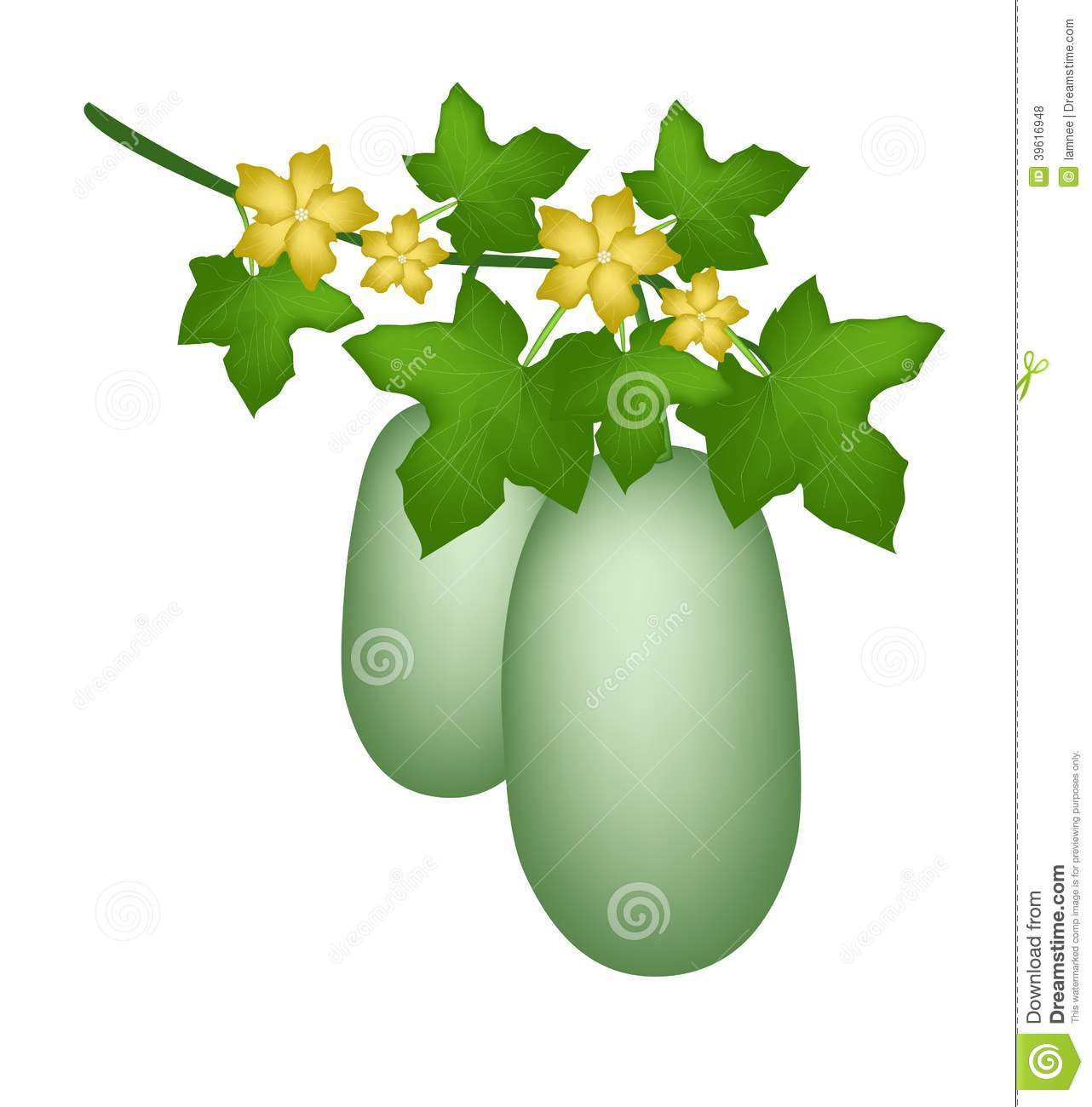 A Winter Melon Plant On White Background Stock Vector.