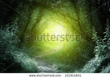 Dark Forest Stock Photos, Royalty.