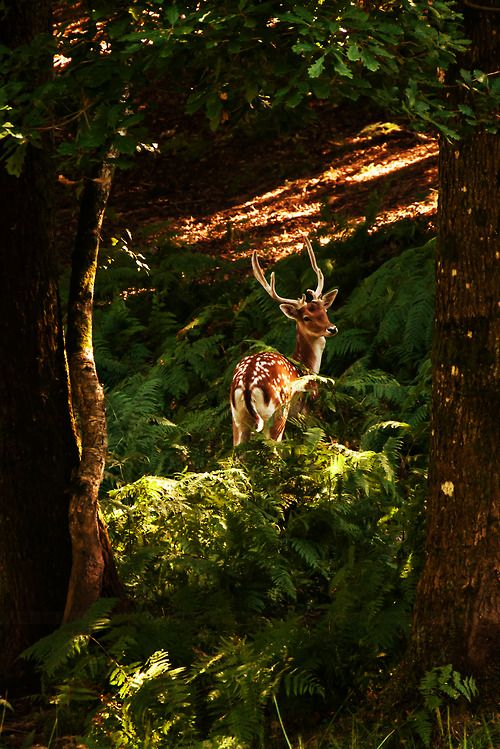 1000+ images about Forest on Pinterest.