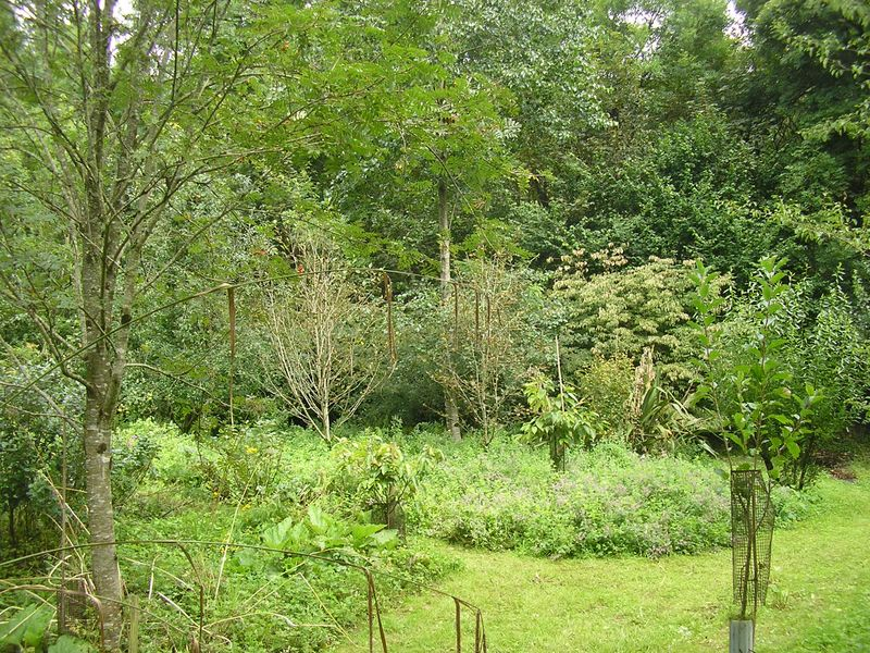 What is Forest Gardening?.
