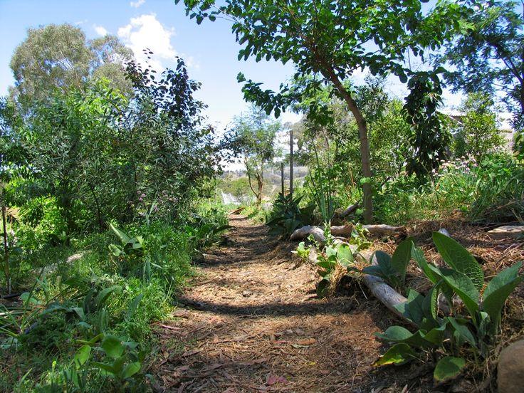 1000+ ideas about Forest Garden on Pinterest.