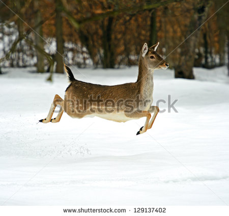 Running Deer Stock Photos, Royalty.