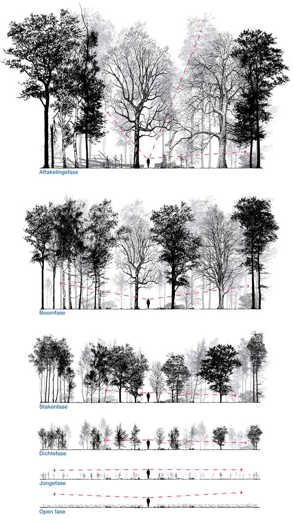 1000+ ideas about Forest Drawing on Pinterest.