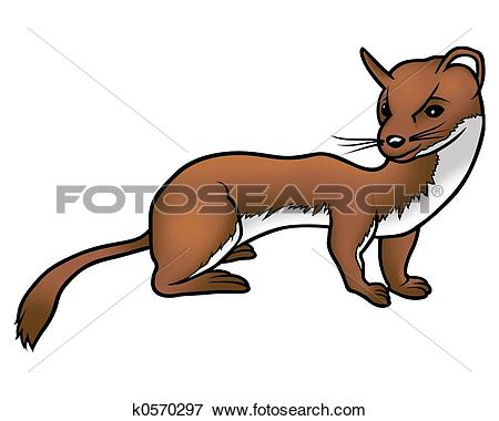 Weasel Illustrations and Clipart. 110 weasel royalty free.