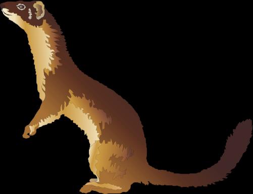 Weasel Clipart.