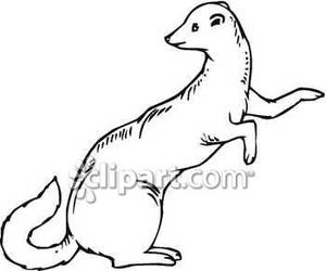 Weasel Clipart.