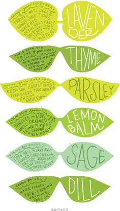 A collection of labels for your kitchen herbs by Shy Socialites.