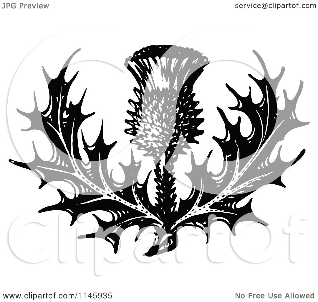 Clipart of a Retro Vintage Black and White Thistle Flower.