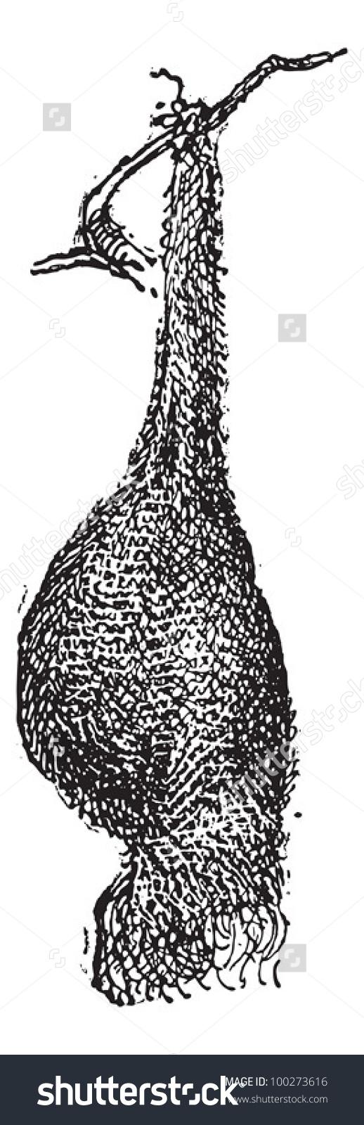 Weaver Bird Clipart.