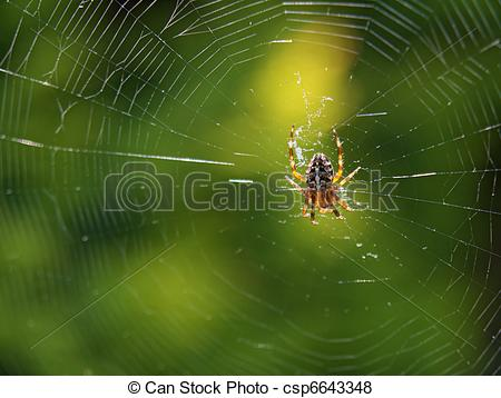 Pictures of A spider is spinning/ weaving its web csp6643348.
