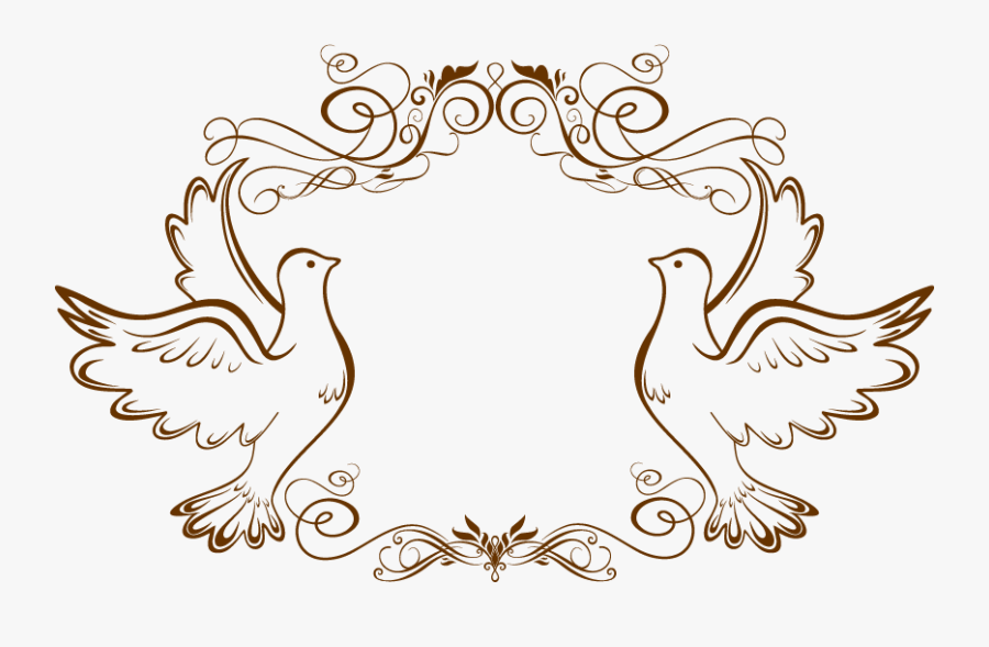 Transparent Pigeon Png.
