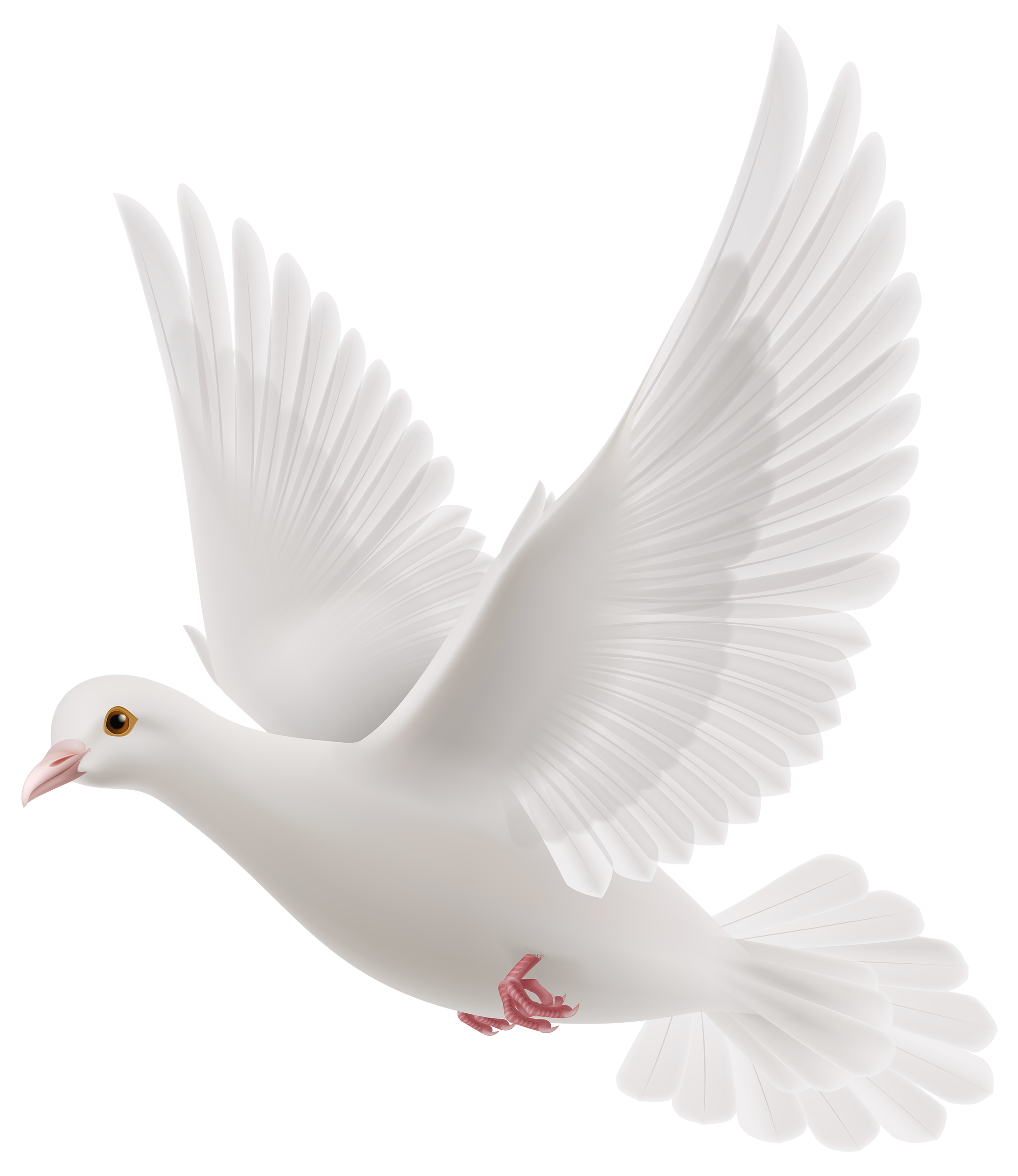 White Dove PNG Clipart.