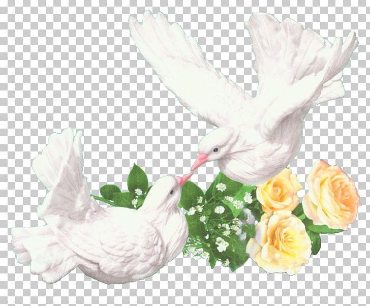 Rock Dove Bird Wedding Homing Pigeon PNG, Clipart, Animals.