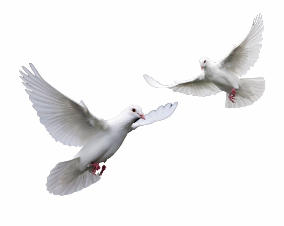 Doves Wedding Doves Png.