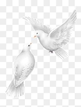 Wedding Dove PNG HD Transparent Wedding Dove HD.PNG Images.