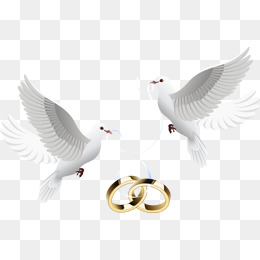 Wedding Dove PNG HD Transparent Wedding Dove HD.PNG Images.