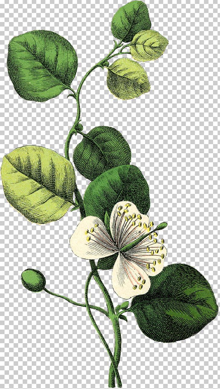 Wedding Invitation Botany Flower Botanical Illustration PNG.