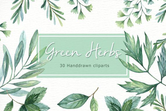 Green Herbs Watercolor clipart, watercolor flower.