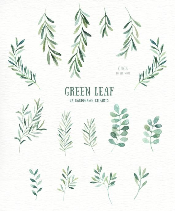 Green Leaf Watercolor clipart, watercolor flower.