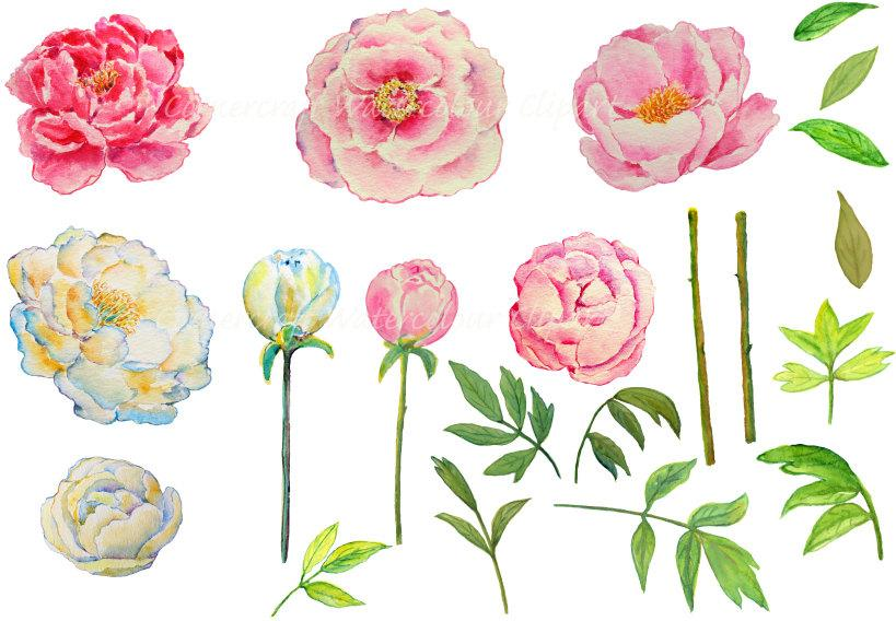 Wedding clipart, watercolor peony pink and yellow printable instant download.