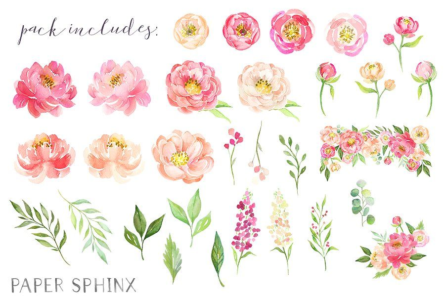 Watercolor Flower Peonies Clipart by PaperSphinx on.