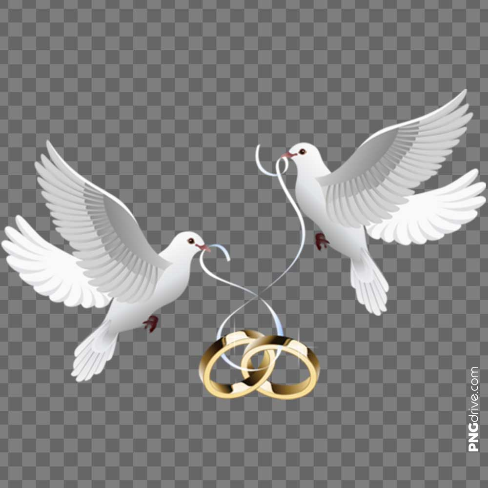 Marriage Clipart Dove Wedding Ring PNG Image.