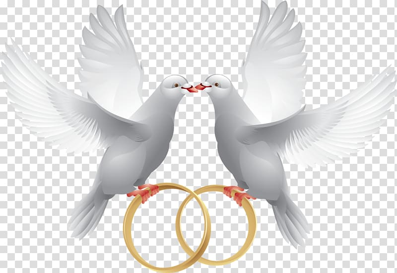 Columbidae Wedding Ring , Bird Wedding Invite transparent.