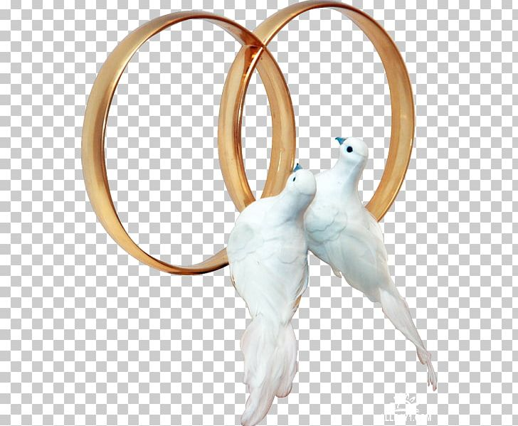 Pigeons And Doves Wedding Ring PNG, Clipart, Bird, Body.