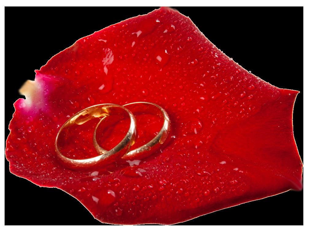 Wedding Rings in Rose Petal PNG Clip Art.