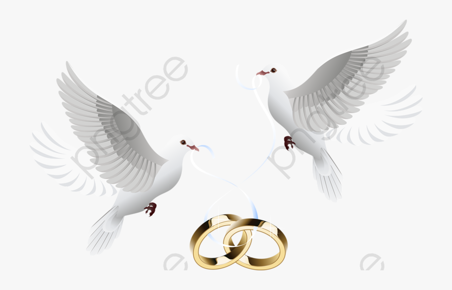 Wedding Ring Clipart Dove.