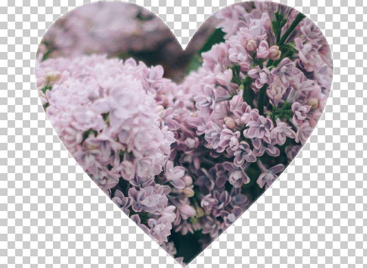 Wedding Blog Flower PNG, Clipart, 2018, Aesthetic, Blog.
