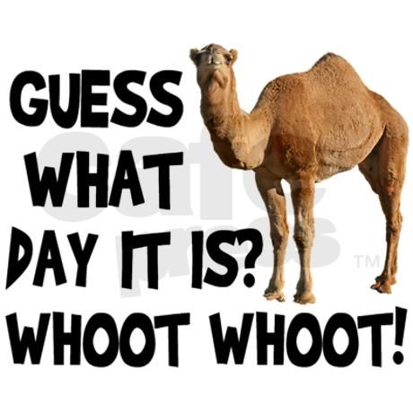 19+ Happy Hump Day Clip Art.