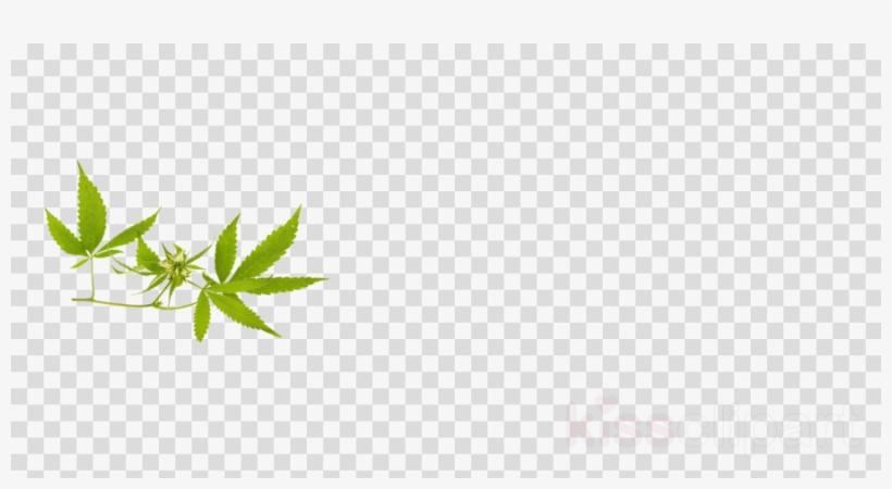 Download Weed Banner Png Clipart Hemp Clip Art Leaf.