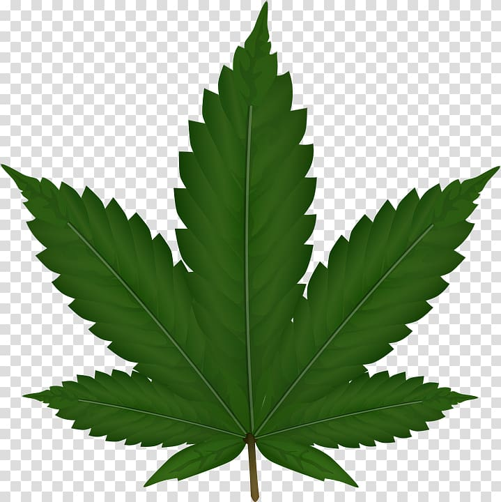 Cannabis sativa Leaf , Cannabis transparent background PNG.