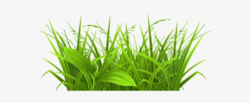 Weed Grass Cliparts Free Download Clip Art.