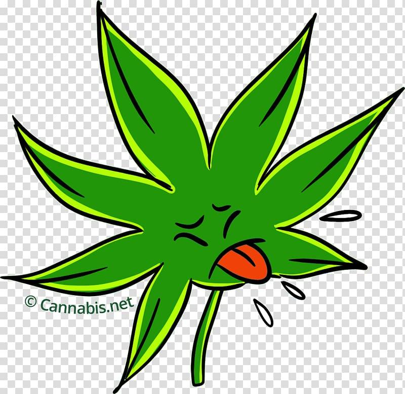 Durban Poison Cannabis sativa Kush Plant, cannabis.