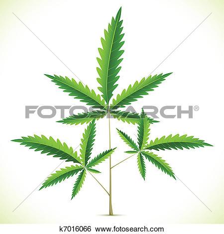 Clip Art of Marijuana Leaf k7016066.