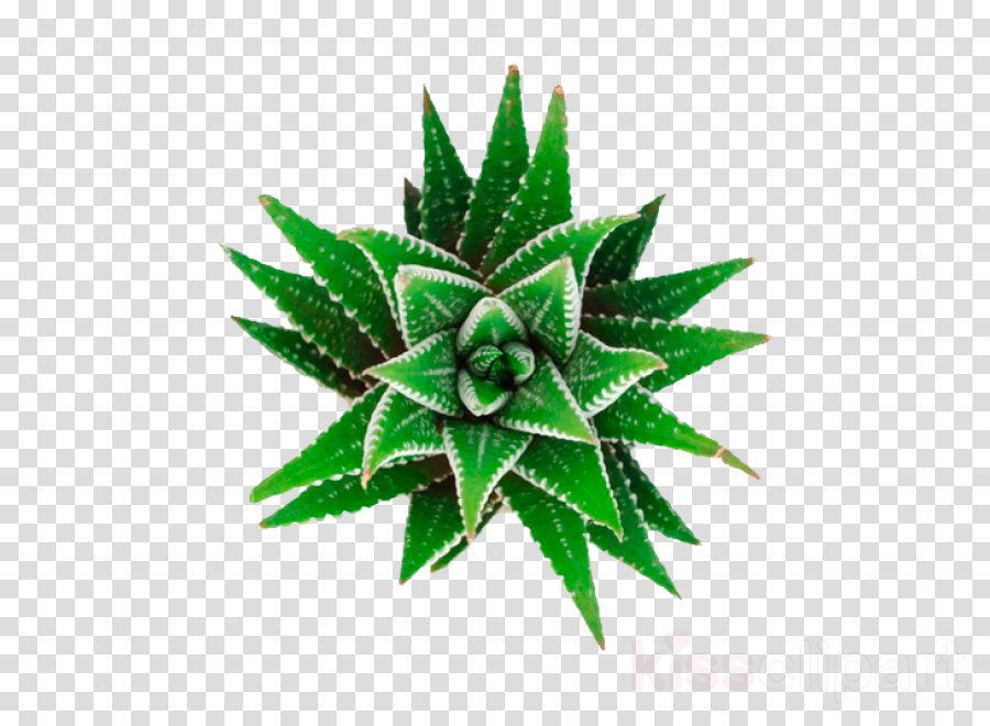 Weed clipart.