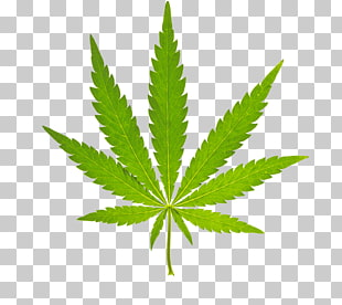 98 cannabis Vector PNG cliparts for free download.