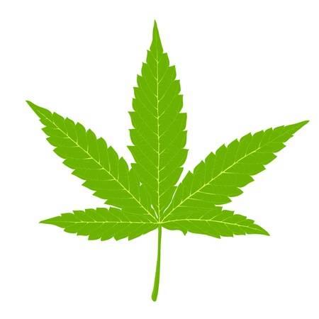 9,365 Marijuana Leaf Stock Illustrations, Cliparts And Royalty Free.